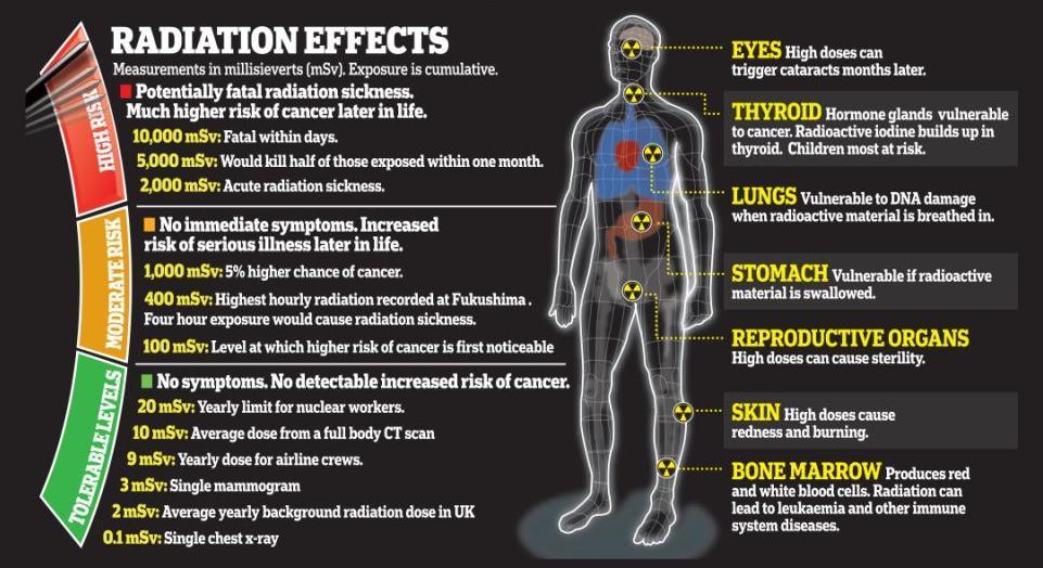Omerta de l'OMS sur les conséquences de l'utilisation de l'Uranium Appauvri Radiation-effects